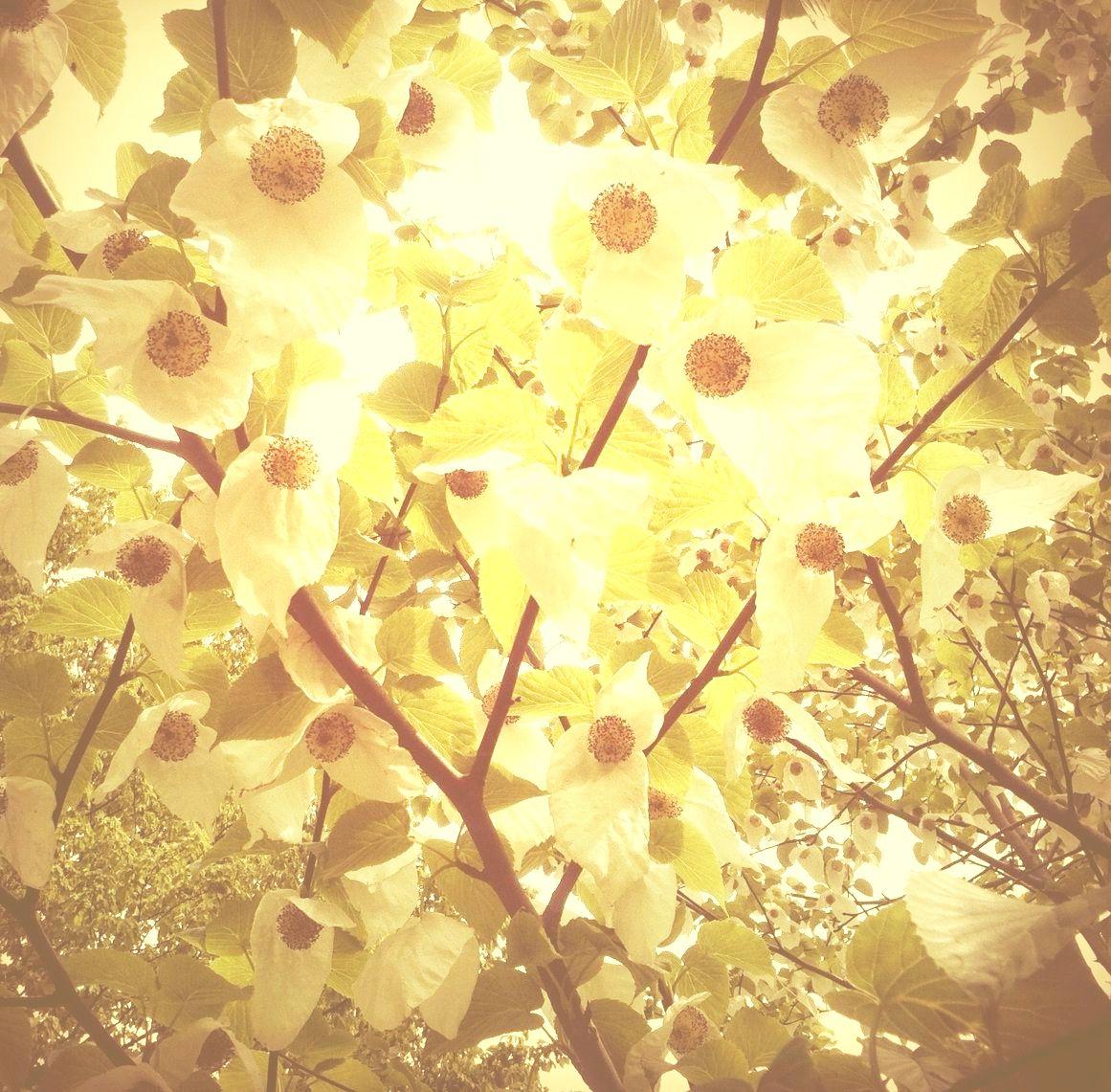 LIFE FLOW  ☆  CHRISTINA WILDE